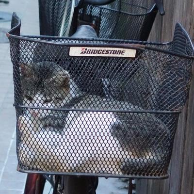 籠猫_c0193077_1115140.jpg
