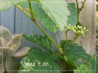 b0096584_2025197.jpg