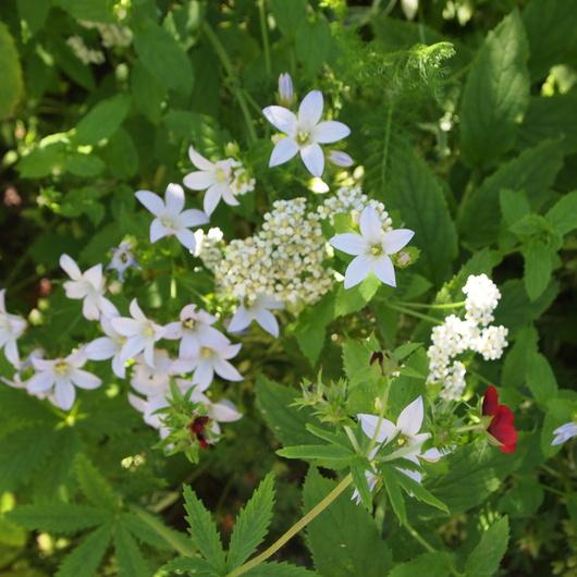 初夏のお庭①_a0292194_17263412.jpg