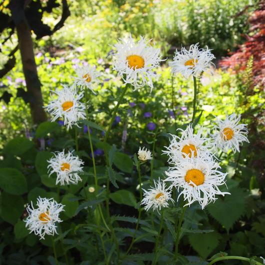 初夏のお庭①_a0292194_1726911.jpg