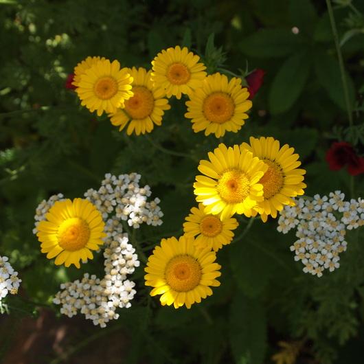 初夏のお庭①_a0292194_17305686.jpg