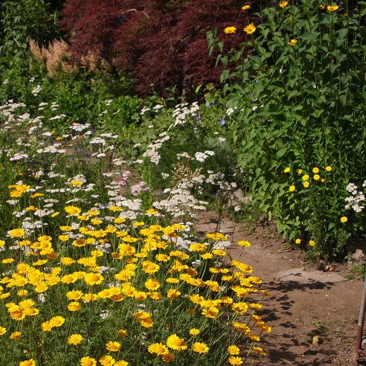 初夏のお庭①_a0292194_1734227.jpg