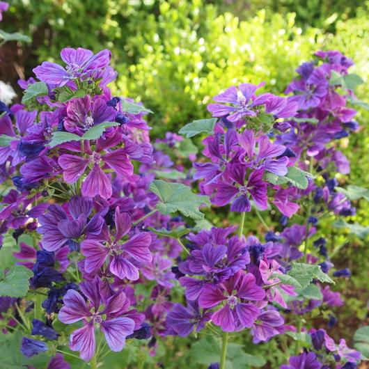 初夏のお庭①_a0292194_17361014.jpg