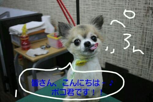 b0130018_104933.jpg