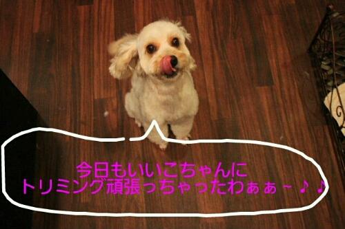 b0130018_106968.jpg