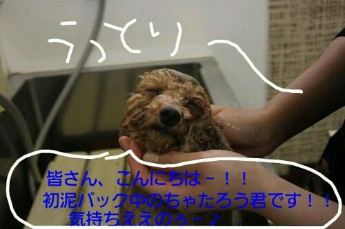 b0130018_16274462.jpg
