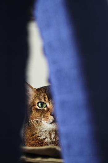 [猫的]何コレ?_e0090124_161743.jpg