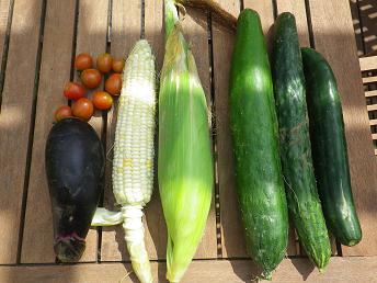 いよいよ野菜が全部そろってきた・・・。_a0139242_4322163.jpg