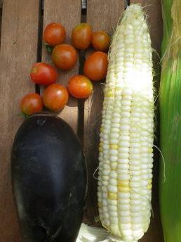 いよいよ野菜が全部そろってきた・・・。_a0139242_4334911.jpg