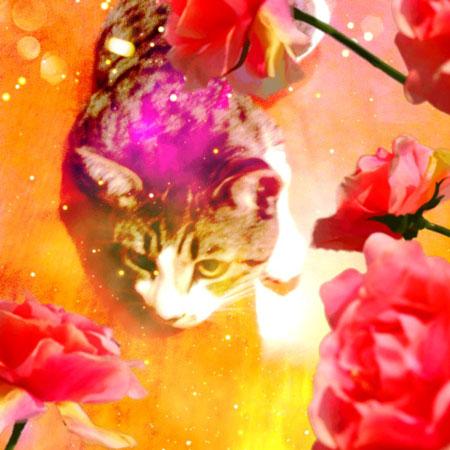 ヒグチユウコ×Fuca猫顔ブローチ♡_a0262845_1746388.jpg