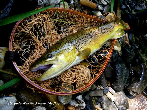 Brown Trout_d0261148_1828193.jpg