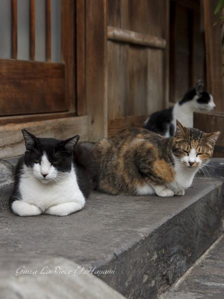 猫のいる風景 ご近所の3匹様_b0133053_0191753.jpg