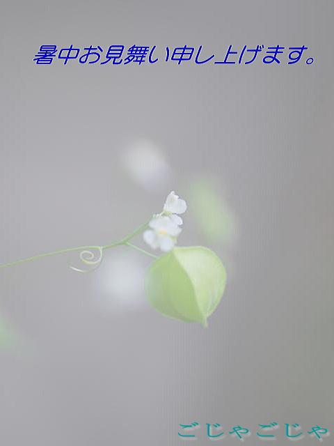b0189573_924468.jpg