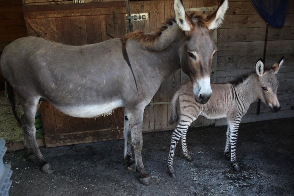 フィレンツェでこんな神秘的な赤ちゃんが産まれました!!Si chiama IPPO!!!!_c0179785_5532172.jpg