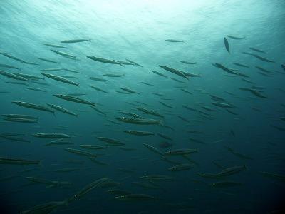 海洋実習~~!!@ラチャヤイ_f0144385_1824259.jpg