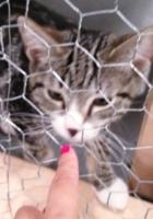アメリカで人気が高まる「ヨガ」と「猫ちゃん」の異色コラボ記事_b0007805_5283512.jpg