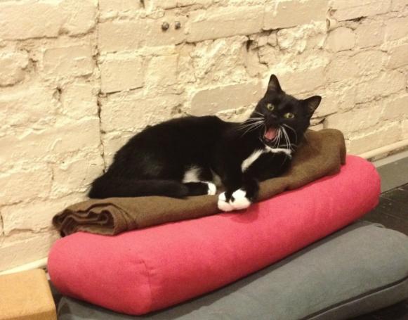 アメリカで人気が高まる「ヨガ」と「猫ちゃん」の異色コラボ記事_b0007805_5381472.jpg
