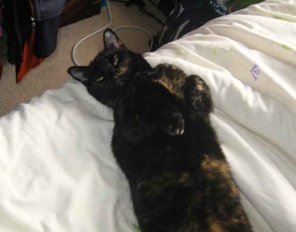 アメリカで人気が高まる「ヨガ」と「猫ちゃん」の異色コラボ記事_b0007805_538294.jpg