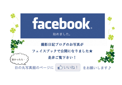 日の丸写真館のfacebookページがオープン!!_b0203705_1212367.jpg