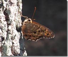 私を元気づけてくれる公園の虫たち_b0025008_2053592.jpg