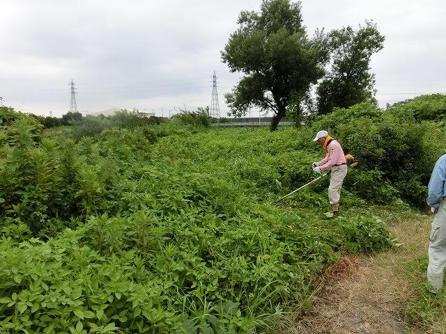 9月の彼岸花ウォークを目標にした「田宿川・滝川・沼川の草刈り」_f0141310_7253651.jpg