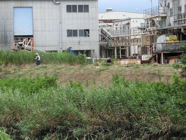 9月の彼岸花ウォークを目標にした「田宿川・滝川・沼川の草刈り」_f0141310_7261054.jpg