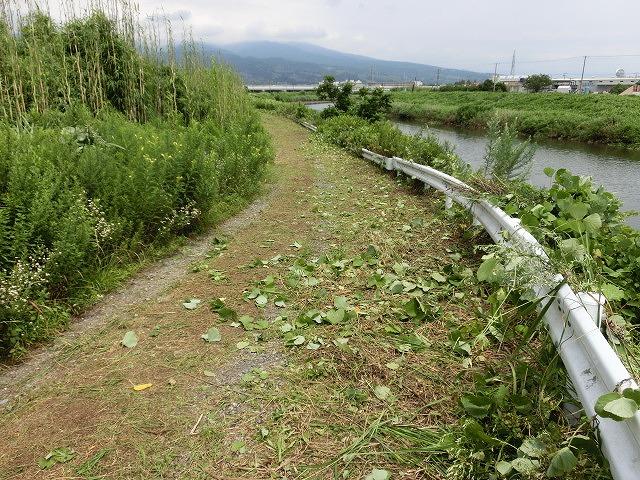 9月の彼岸花ウォークを目標にした「田宿川・滝川・沼川の草刈り」_f0141310_7264349.jpg