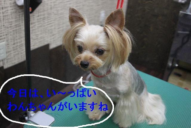 お疲れちゃぁ~~ん!!_b0130018_23424373.jpg