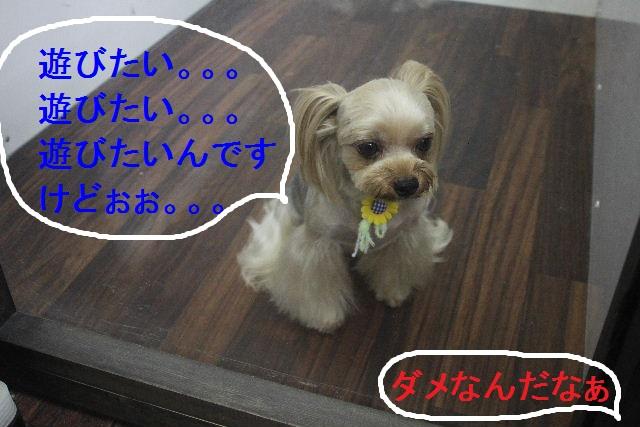 お疲れちゃぁ~~ん!!_b0130018_23425292.jpg