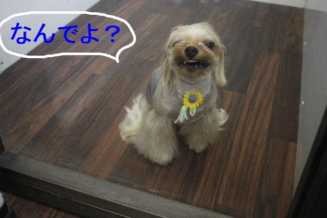 お疲れちゃぁ~~ん!!_b0130018_2343197.jpg