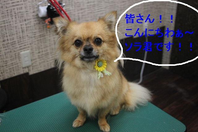 お疲れちゃぁ~~ん!!_b0130018_2344495.jpg
