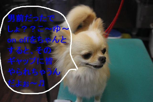 お疲れちゃぁ~~ん!!_b0130018_23455342.jpg