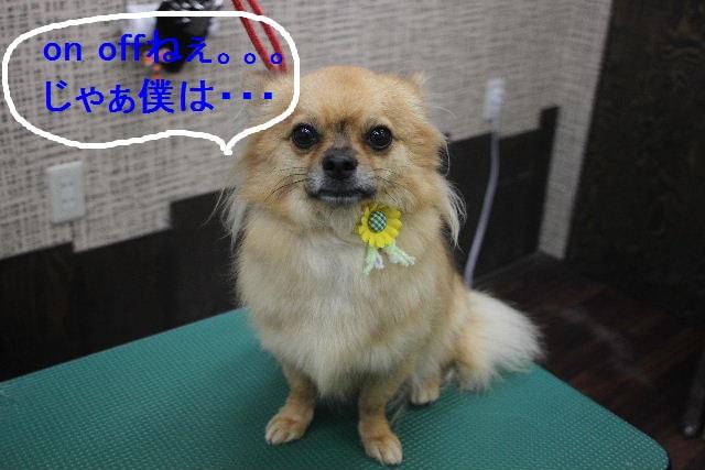 お疲れちゃぁ~~ん!!_b0130018_234706.jpg