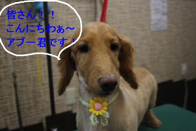 お疲れちゃぁ~~ん!!_b0130018_23481617.jpg