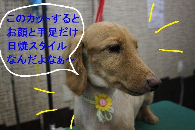 お疲れちゃぁ~~ん!!_b0130018_23482133.jpg