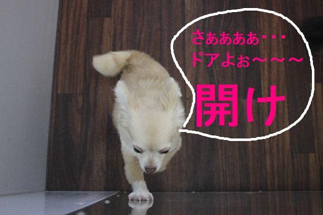 お疲れちゃぁ~~ん!!_b0130018_235195.jpg