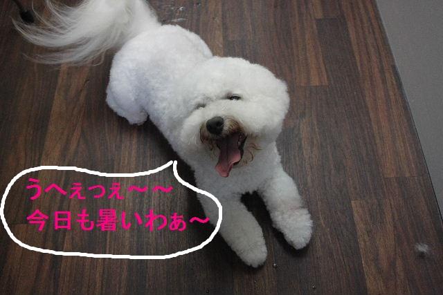 お疲れちゃぁ~~ん!!_b0130018_23534641.jpg