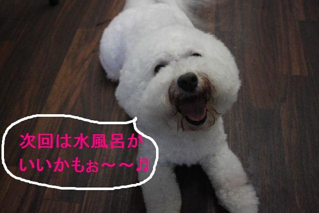 お疲れちゃぁ~~ん!!_b0130018_23535346.jpg