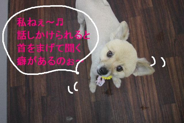 お疲れちゃぁ~~ん!!_b0130018_23554013.jpg
