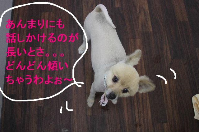 お疲れちゃぁ~~ん!!_b0130018_23561689.jpg
