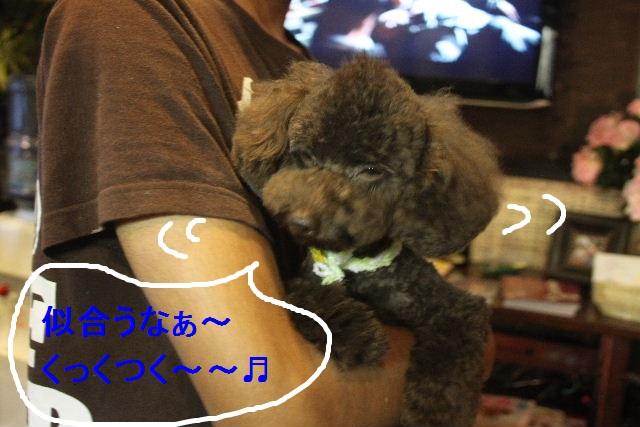 お疲れちゃぁ~~ん!!_b0130018_2359836.jpg