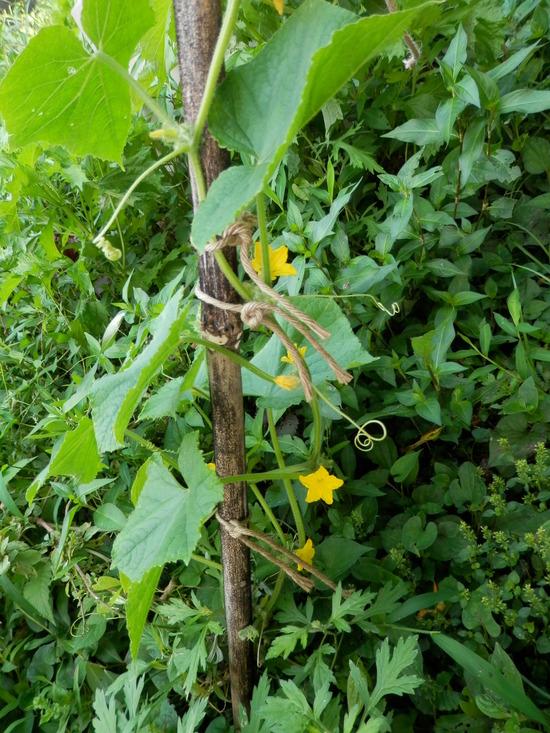 自生の植物が。_a0125419_711370.jpg