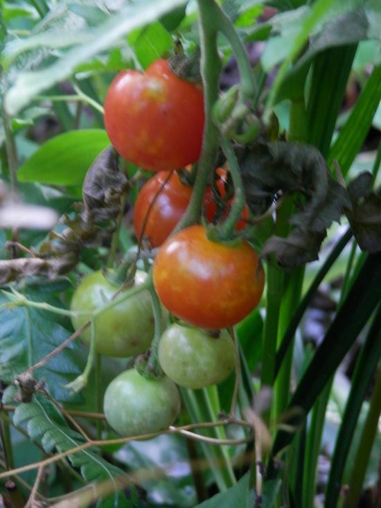 自生の植物が。_a0125419_7132428.jpg