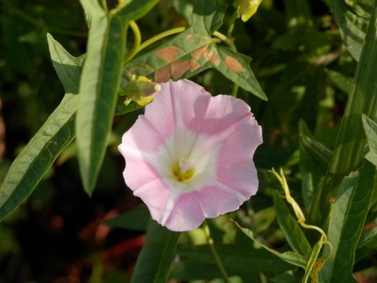 自生の植物が。_a0125419_7142761.jpg