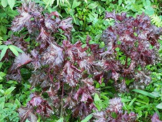 自生の植物が。_a0125419_762550.jpg