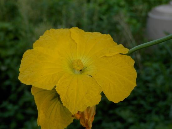 自生の植物が。_a0125419_782994.jpg