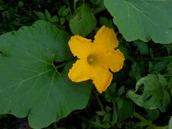 自生の植物が。_a0125419_792656.jpg