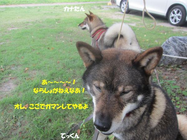 f0143123_92150100.jpg