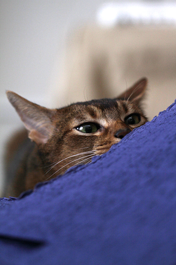 [猫的]コレ紙?_e0090124_0494930.jpg