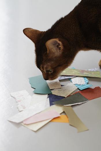[猫的]特殊紙コレクション_e0090124_23555978.jpg